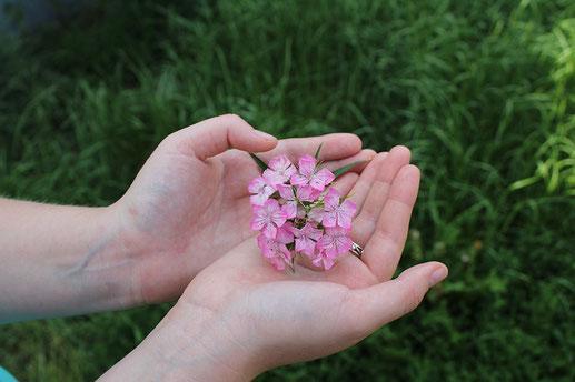広げられた両手のうえのピンクの小花。緑の芝生。