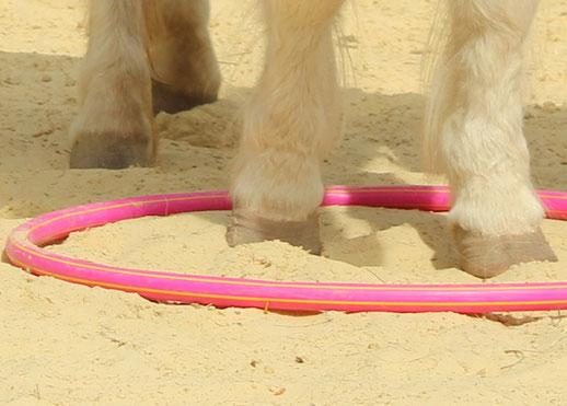 zum Ponyreiten gehört die Ponypflege und zur Ponypflege gehört die Hufpflege
