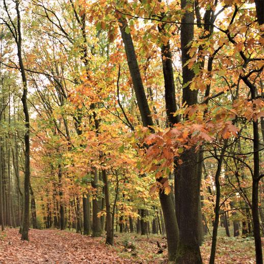 Haard Wald Herbst