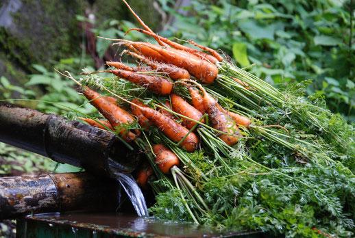 自然栽培 里山 農業体験 体験農場 すどう農園