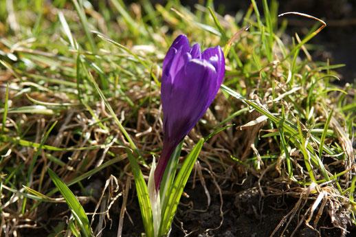 Es wird Frühling auf der Hallig