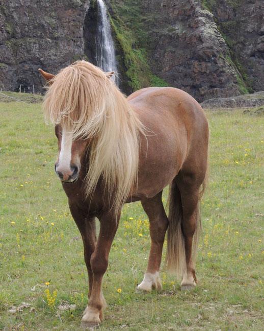 Stolzes Pferd