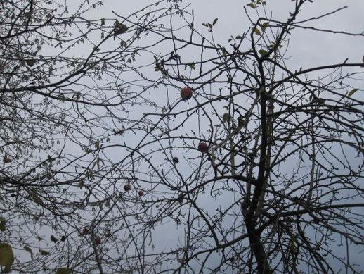 Ein paar letzte Äpfel für die Vögel...