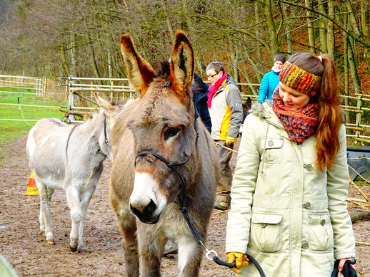 Persönlichkeitstraining mit einem Esel in Bad Berleburg, Naturpark Sauerland-Rothaargebirge