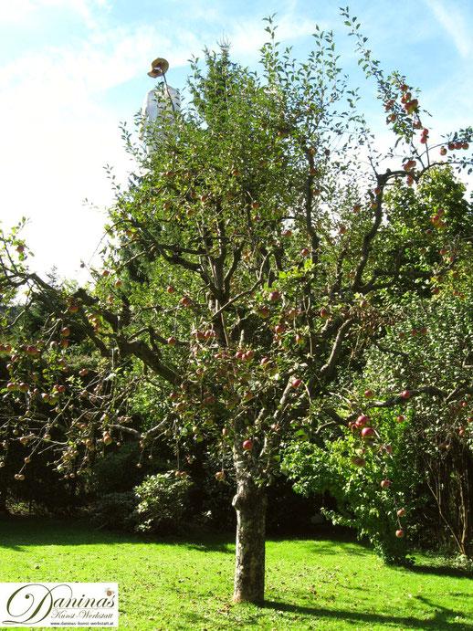 Apfelbaum im Herbst mit rotbäckigen saftigen Jonathan Äpfeln