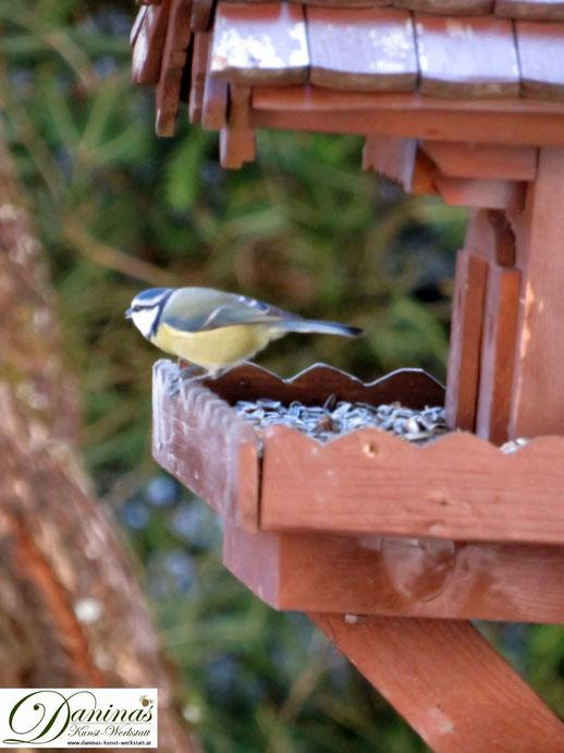 Lebhafte Blaumeise bei einem kurzen Vogelhaus Besuch by Daninas-Kunst-Werkstatt.at