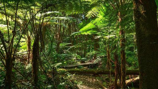 Cairns Tipps Daintree Rainforest