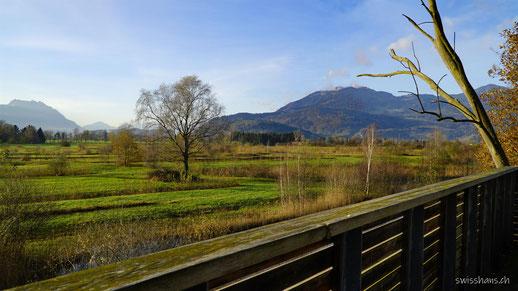Rheintaler Rietlandschaft mit Geländer des Aussichtsturms  im Vordergrund