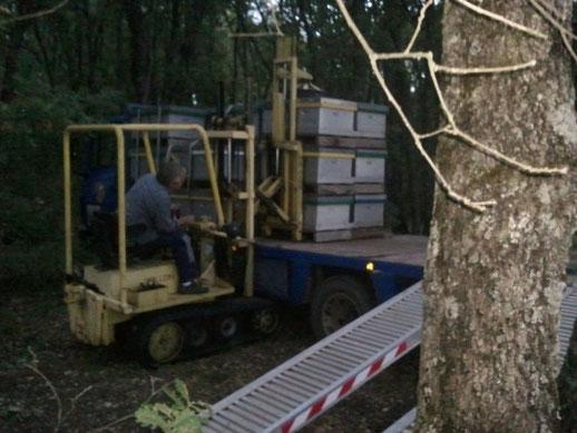 transhumance de ruche