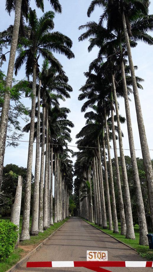 Eingang Botanischer Garten in Aburi