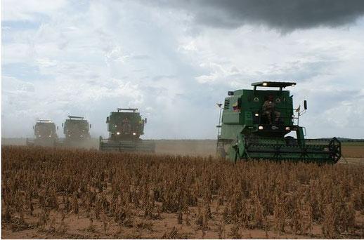Mit Gruss an Monsanto