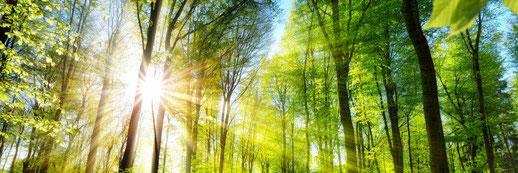 Das Biotop Wald - Seelentröster für gestresste Menschen.