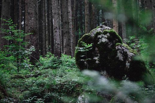Zauberwald Ramsau, Bayern, magische Wälder in Deutschland
