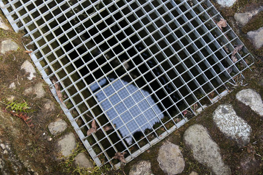 Der Wasserspiegel befindet sich nur etwa 1 Meter unter der Oberfläche.