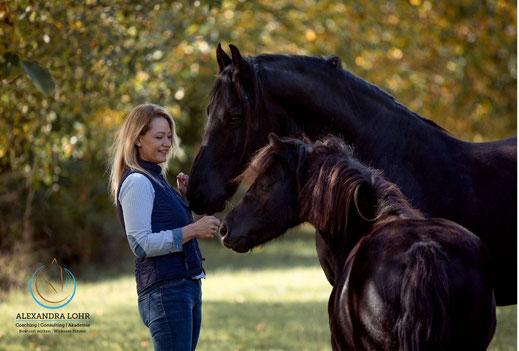 Gelassenheitstraining Pferd Kurs, Lehrgang Bodenarbeit, Knotenhalfter, Agility, Bodenarbeitsseil