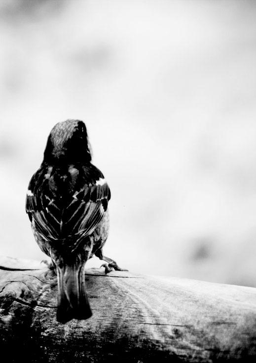 Vogel auf Zaun am Strand an der französischen Atlantikküsten