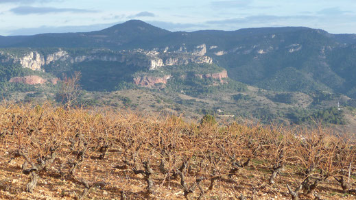 Weinanbau in Katalonien - Foto: E. Catalá