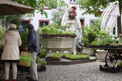 Wildpflanzenmarkt, Mai 2018: ein jährlicher Anlass auf dem Andreasplatz in Basel-Stadt
