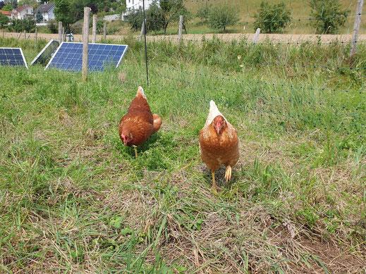 Eiernesterl Schleißheim Hühner