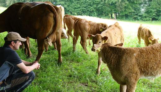 Vertraute Tiere auf der Weide