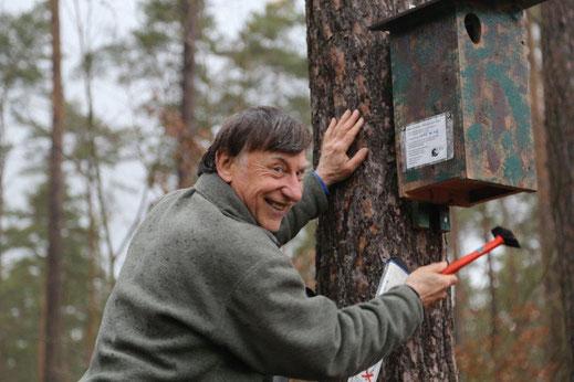 Klaus Brünner beim anbringen eines Wendehalskastens (Foto: C. Bria)
