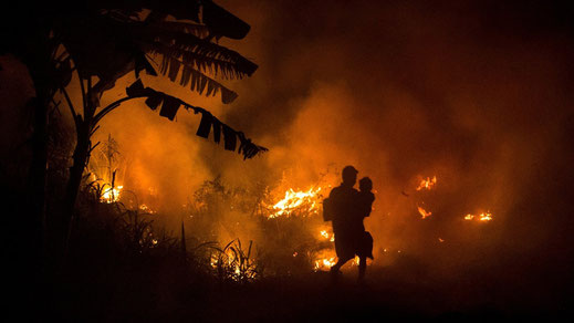 In Südostasien kam es im Herbst 2015 zu riesigen Waldbränden. Die Folgen für die Bevölkerung und erst recht für die Tiere und den Wald waren in weiten Teilen Indonesiens katastrophal.