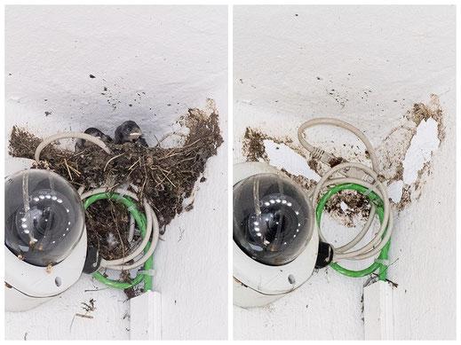Zerstörtes Nest in der Kaiserstraße (Foto: Juretzky)