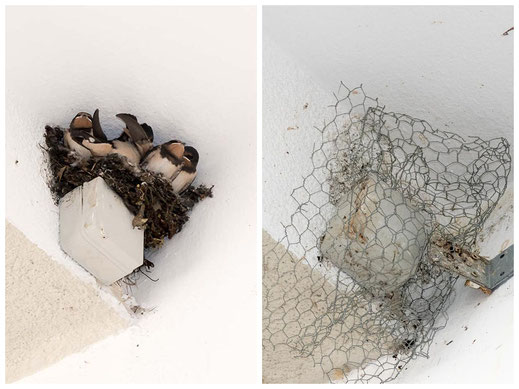 Unbewohnbares Nest am Max-Josephs-Platz (Foto: Juretzky)