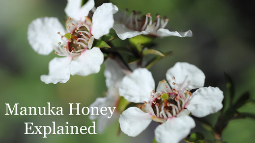 Manuka Honey Explained
