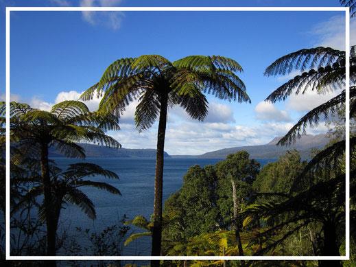 Comment se rendre en Nouvelle-Zélande