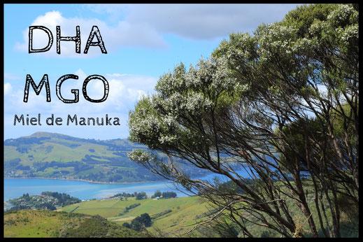 DHA et MGO dans le miel de Manuka. Arbre et fleurs de Manuka, Otago Harbour, Dunedin, NZ