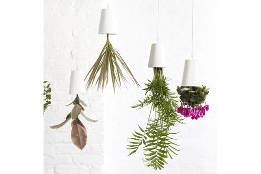Chez Boskke, les plantes ont la tête à l'envers...