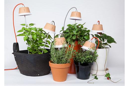 Cynara, lampes design plantes tige aluminium pot de fleurs