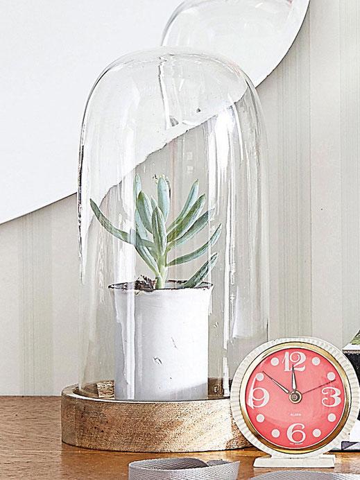Coche en verre plante Cyrillus