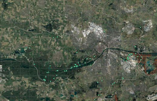Einzelbeoachtungen vom Kuckuck 2019 (Basis Google-Earth/ Copyright LBV Ingolstadt)