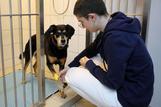 Großzügige Tierstation