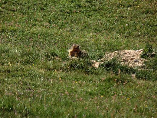 Dans le village, vers le Mont-Cenis, dans le Parc National de la Vanoise ou dans les villages de Haute Maurienne, découvrez et laissez les paysages vous époustouflez.