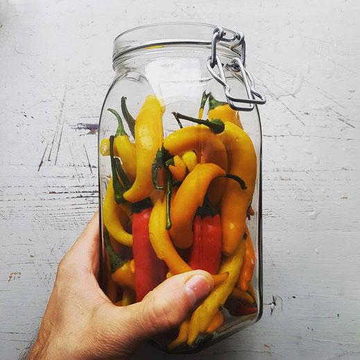 Chilischoten fermentieren