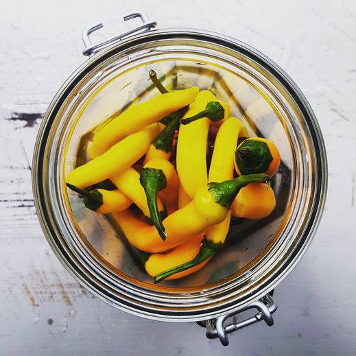 Scharfe Soße fermentieren