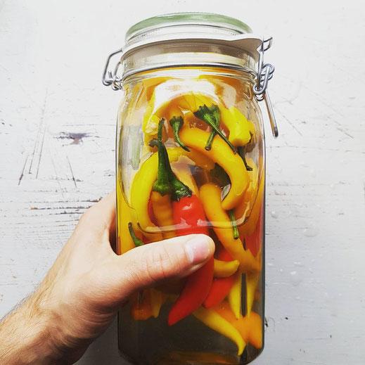 Chili Schoten fermentieren