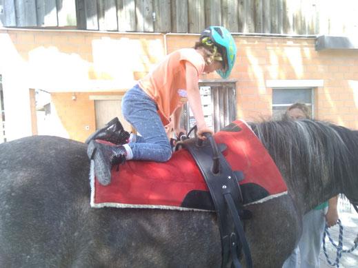 Angebote rund um das Pferd