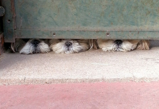 Der Sozialhund