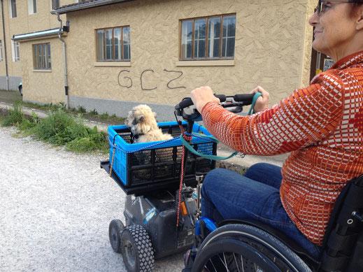 Tiere für Senioren