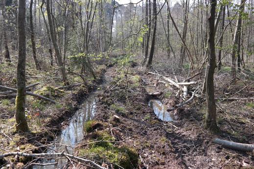 Neu angelegte Rückegasse in Gaggenau auf einer ehemaligen Deponie.