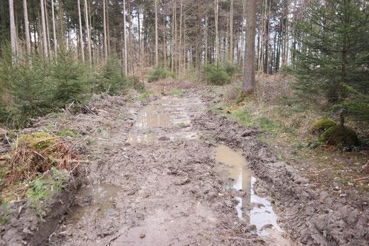 Wiederbefahrene Rückegasse mit Altpfützen in Radolfzell. Stellenweise wurde der Boden mit einem Gefälle leicht angekratzt um die Pfützenbildung zu fördern.