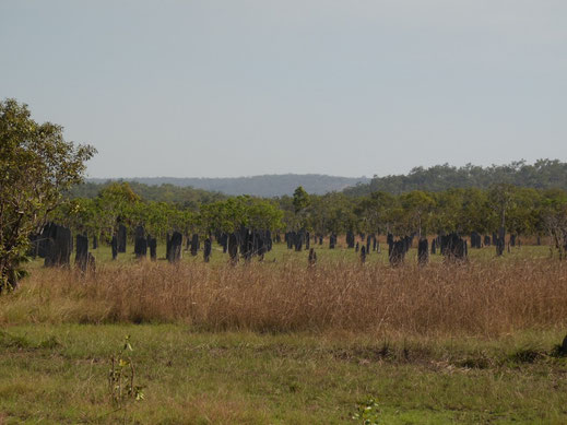 Australien, Northern Territory, Litchfield National Park, Magnetic Termite Mounds