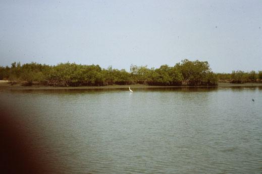 Reisebericht, Reiseblog, Atlantik, Überquerung, Segeltörn, Casamance, Senegal, Carabane, Fluss, Mangrove, Reiher