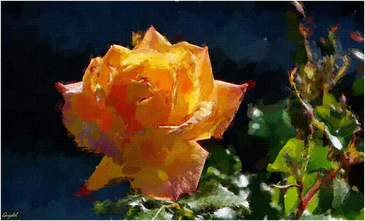 Impression Rose Jaune/Orange