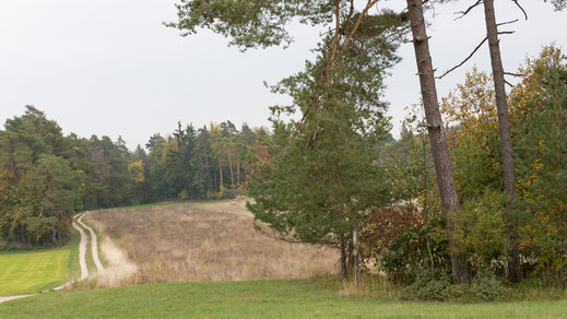 Auf dem Randen (Foto: S. Trösch)
