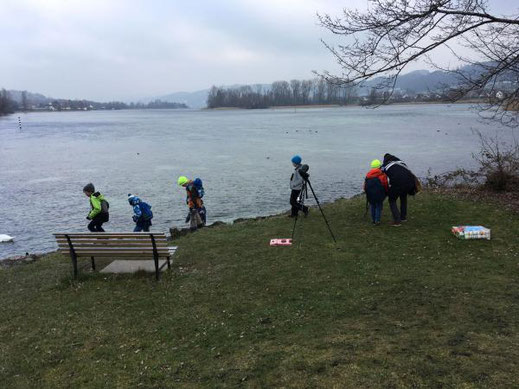 """Exkursion """"Gefiederte Wintergäste auf dem Untersee und Rhein"""" (Foto: Gwaagge)"""